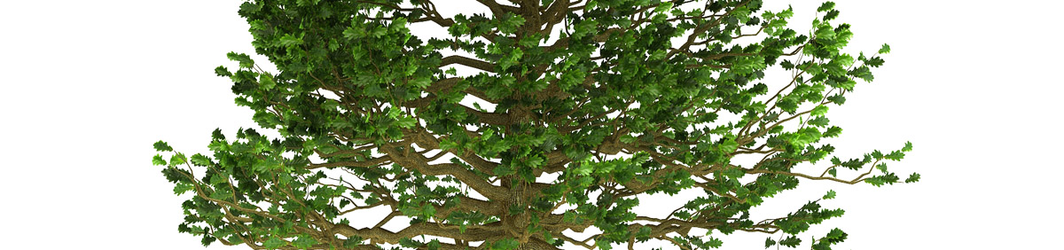 DOSCH 3D Tree Library for Lightwave & Modo