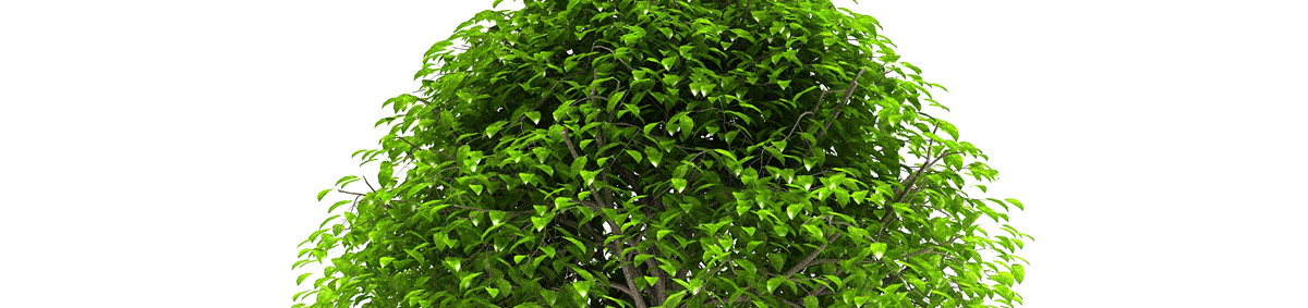 DOSCH 3D Tree Library for Maya & Softimage