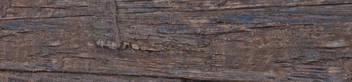 DOSCH Textures Old Wood