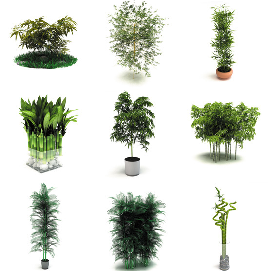 Dosch design dosch 3d bamboo plants for Moderne pflanzen innen