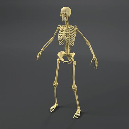DOSCH DESIGN - DOSCH 3D: Human Anatomy