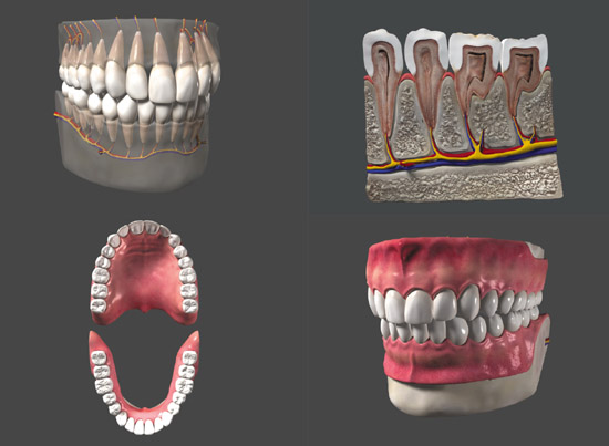 DOSCH DESIGN - DOSCH 3D: Medical Details - Human Teeth V1 2