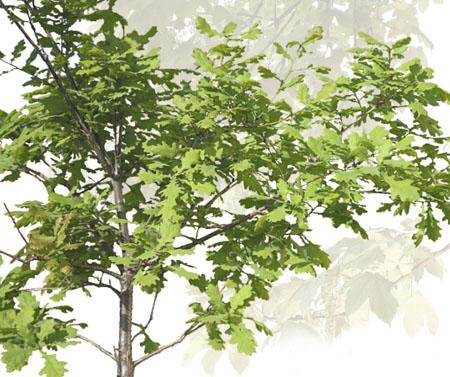 DOSCH DESIGN - DOSCH 2D Viz-Images: Foreground Plants & Trees
