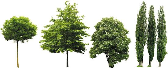 Dosch Design Dosch 2d Viz Images Trees Extended