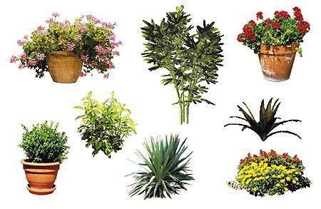 Dosch design dosch 2d viz images plants for Software progettazione giardini 3d free